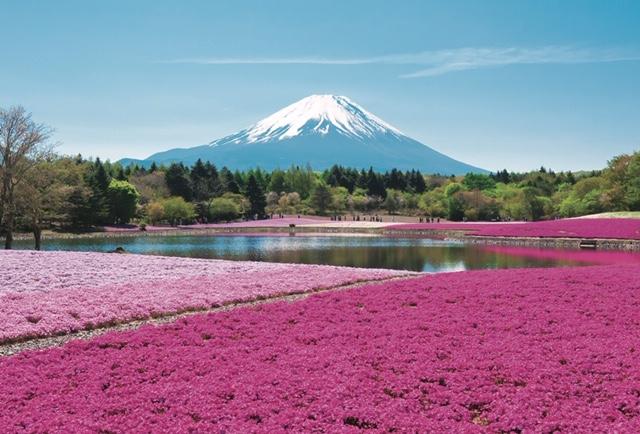 芝桜ポストカード